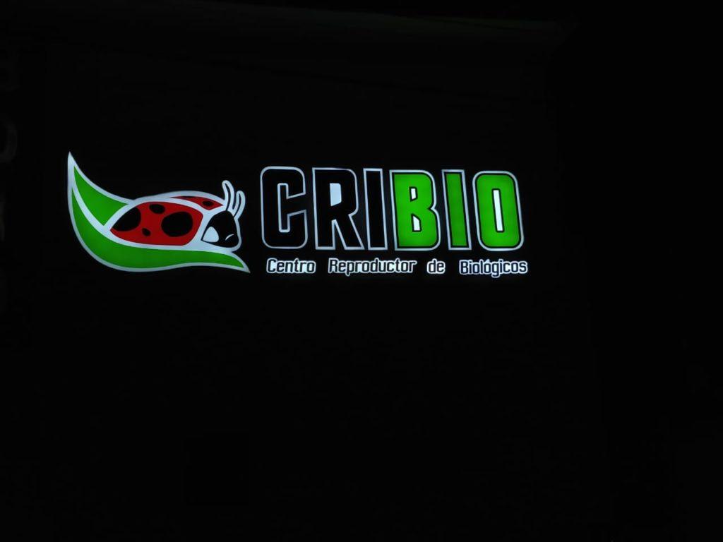 ACRILICO 2019 - CRIBIO 2 NOCHE